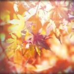 秋を通り越して冬が来た